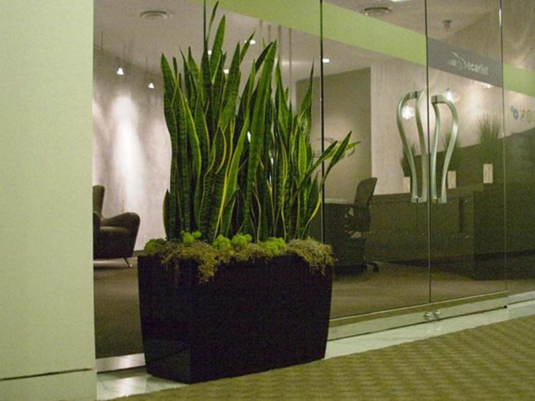 Services | Indoor Plant Sales & Indoor Plant Maintenance | El Paso, TX